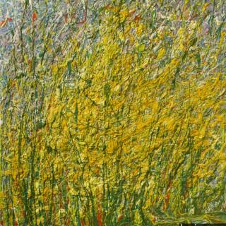 Желтые полевые цветы Золотарник или Золотая розга