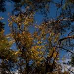 : ясень, клен, сад, парк, кошка, профессионализм, смешная, город, ель, золотая, осень, дорога, дуб, фиолетовые, цветы, колоски, сказка, Новобельгийские, астры, березы, красивый, листья, церковь, иней, роса, храм, Промзона, красный, Церковь, триптих, облака, Железнодорожная, платформа, Царицыно, Троицк, пейзаж, золото, Сиена, Siena, путешествия, достопримечательности, путешествия, готика, традиции, изобразительном искусстве, список, известных, Сиенской школы, Дуччо, Симоне Мартини, Амброджо Лоренцетти, Пьетро Лоренцетти, Мартино ди Бартоломео, Франческо ди Джорджо, произведения эпохи Возрождения, храм, палаццо, богатые, коллекции,художественных музеев, Пьяцца дель Кампо, Piazza del Campo, центральная, площадь, итальянского города, величественных, средневековых площадей, Торре дель Манджа, архитектурной, доминантой, площади, Сиенский собор, Duomo di Siena, Собор, латинский крест, купол, колокольню, колоны, Купольный фонарь, Джованни Лоренцо Бернини, арки, Италия, город, Ассизи, Сансеполькро, история, Возрождения, Луки Пачоли, Пьеро делла Франческа, Воскресение Христа, музей, сказка, Джотто, Мартини, Лоренцетти, Чимабуэ, святой, Франциск, мечта, Распятие, храм, Минервы, Assisi, Церковь, Сан-Франческо, базилика Святого Франциска, Basilica di Santa Chiara, Базилика Святой Клары, горы, достопримечательности, путешествия, готика, Золотарник, многолетнее, травянистое, Астровые, Золотая розга, растение, свет, биография, известная, российская, представитель, семья, пленэр, Троицк, Московская обл, капитан, мебель, вдохновение, Андрей Рублев, материал, цветок, состоявшийся, слой, широкий, эмоции, густота, ингредиенты, эксперимент, пропорция, выдержка, время, температура, тщательность, решение, чувство, состав, созреет, начало, пленэр, состояния, оттенки, оружие, меч, грань, плодотворный, Артюра Рембо, Иосифа Сталина, развертывания, точность, движение, абстрактные, пейзаж, натюрморт, натура, полутон, ноты, очевидны, свободный, студия, портрет, писать, Романов Двор, харизма, Мари